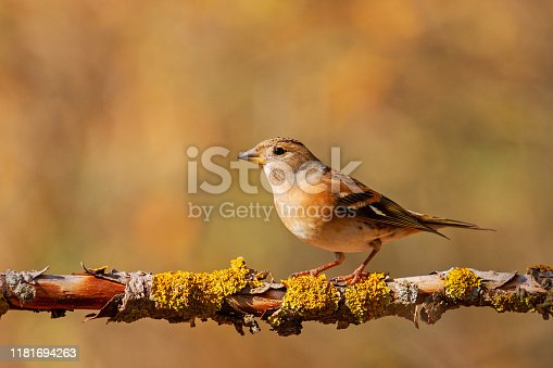 beautiful wild bird sits on a branch in the forest, wild nature