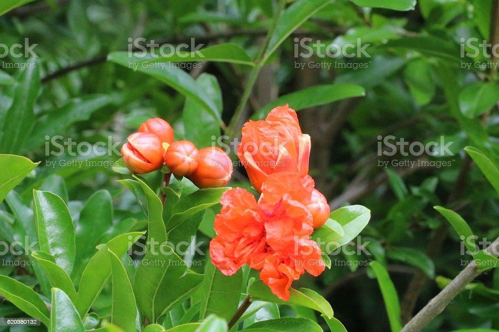 Piękne Dziki kwiat zbiór zdjęć royalty-free