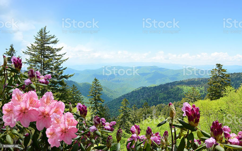Beautiful wild flowers blooming in mountains. stock photo