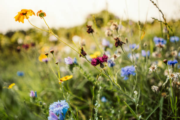 beautiful wild flowers in a meadow - meadow stock pictures, royalty-free photos & images