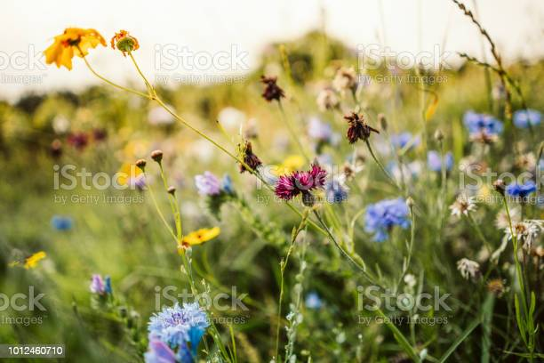 Photo of Beautiful wild flowers in a meadow