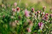 Beautiful wild flowers in a meadow