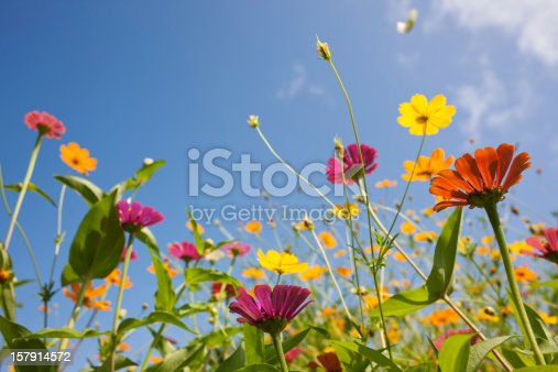 Beautiful wild daisies in a meadow. Shallow depth of focus.