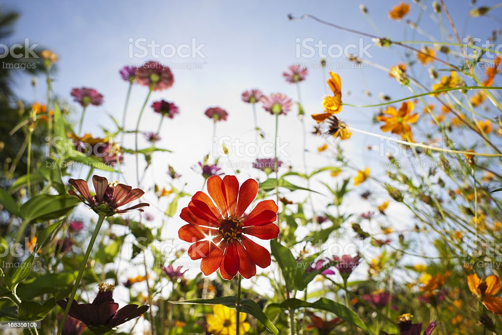 Beautiful wild flowers in a meadow. stock photo
