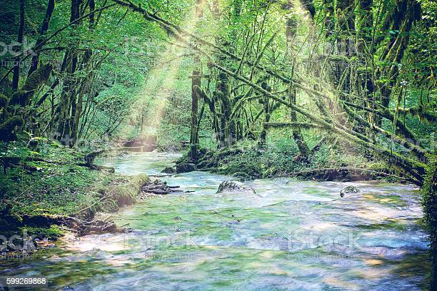 Photo of Beautiful wild fresh water stream in forest under bright sunlight