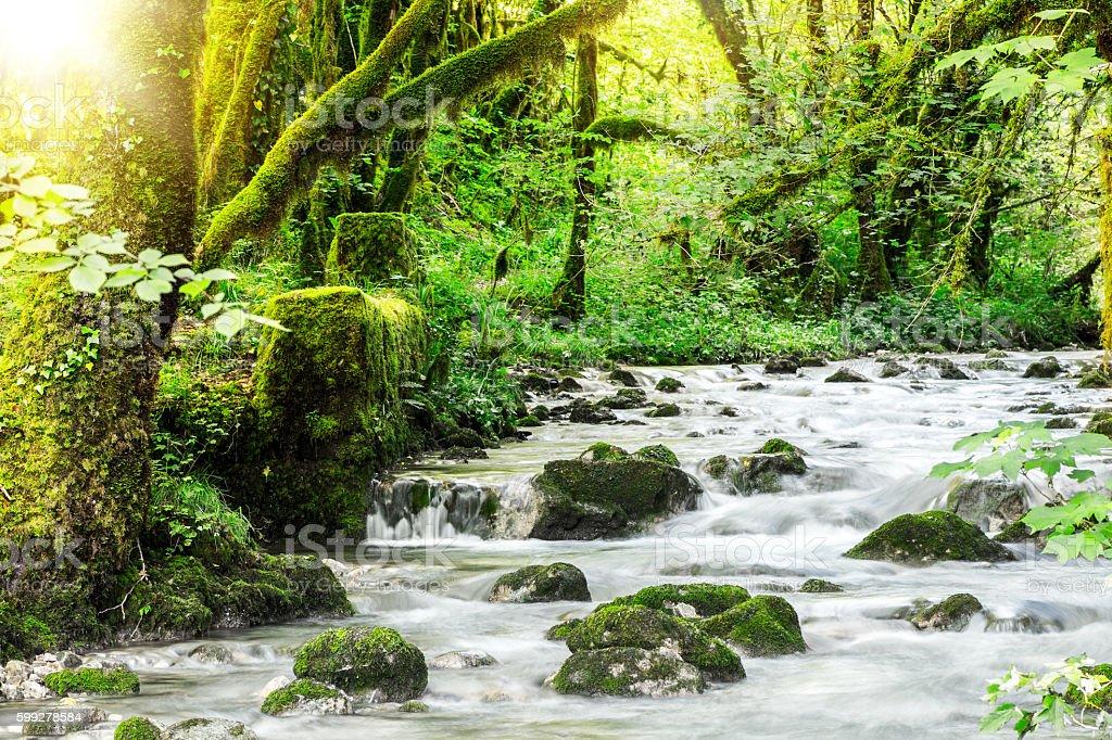 Beautiful wild fresh water stream in forest under bright sunlight stock photo