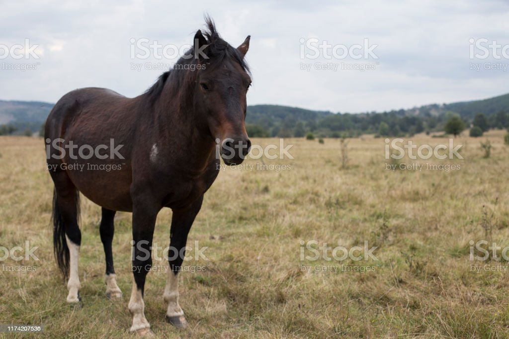 Beautiful Wild Horse Photos Stock Photo Download Image Now Istock