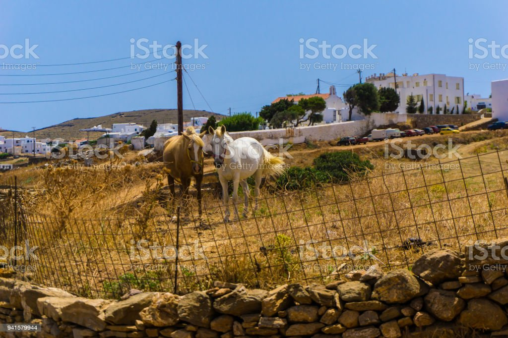 Beautiful wild horses grazing in cycladic island of Kythnos in Greece royalty-free stock photo