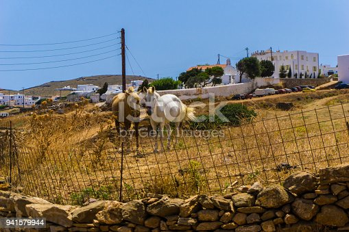 Beautiful Wild Horses Grazing In Cycladic Island Of Kythnos In Greece Stock Photo & More Pictures of Agricultural Field