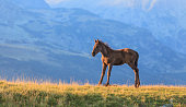 Beautiful wild horses in a remote regions in the mountains