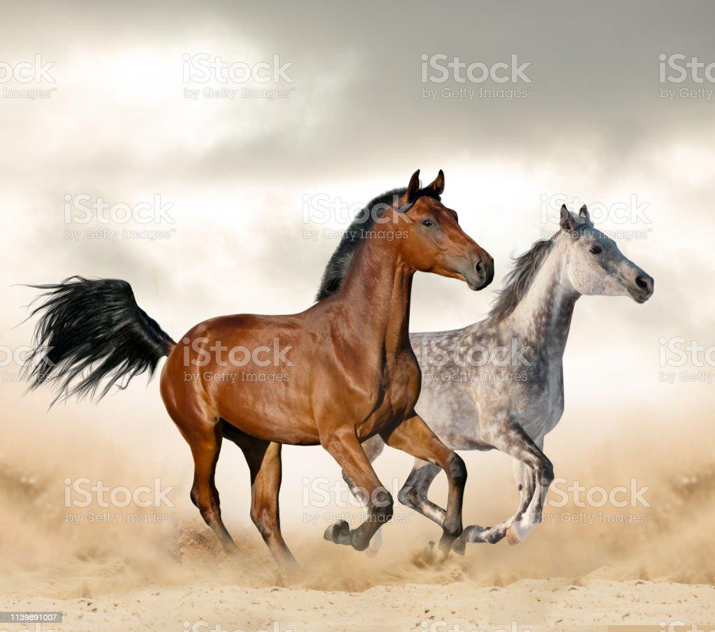 Beautiful Wild Horses Stock Photo Download Image Now Istock