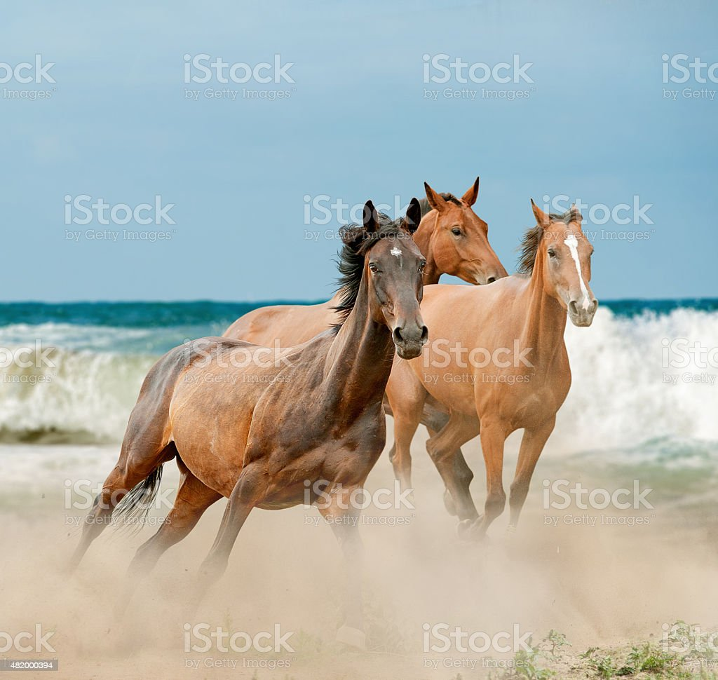 Beautiful Wild Horses Running By The Sea Stock Photo Download Image Now Istock