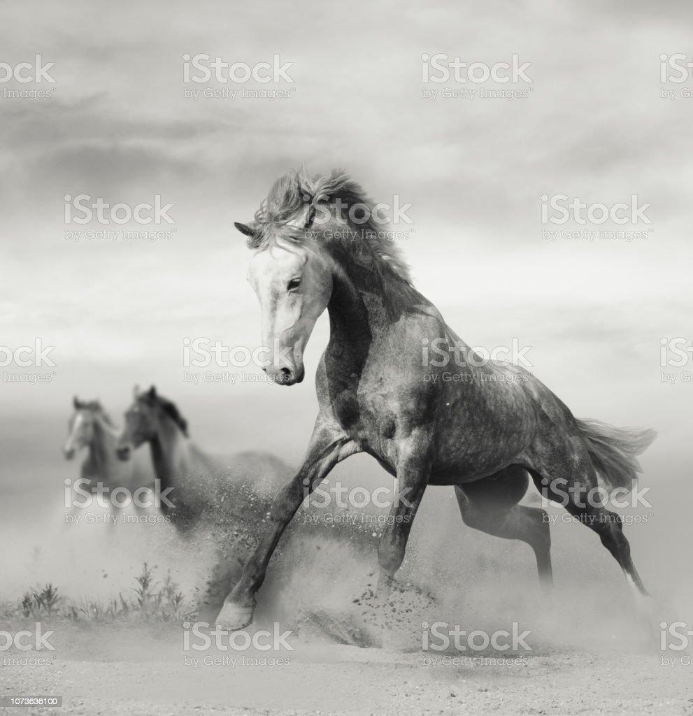 Beautiful Wild Horses Running On Freedom Stock Photo Download Image Now Istock