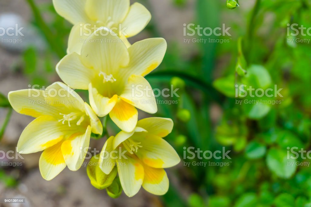 Fotografia De Hermosas Flores Amarillas Silvestres Closeup Escena De