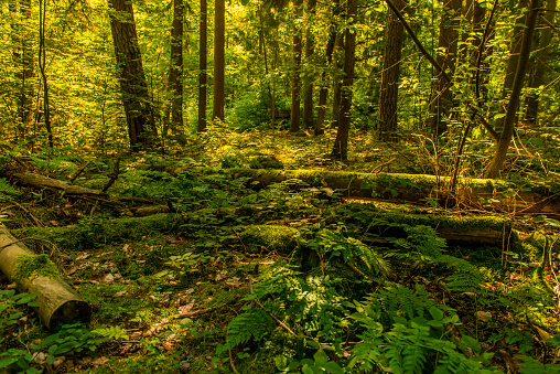 Beautiful wilderness forest green fallen broken trees lush decay