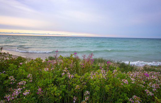 Beautiful Wildflower Sunset Beach On The Michigan Coast Of Lake Huron