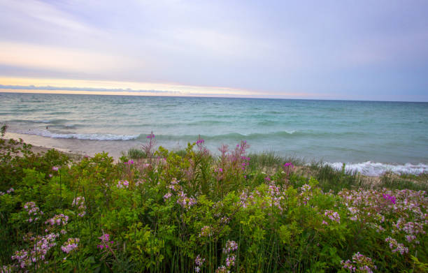 beautiful wildflower sunset beach on the michigan coast of lake huron - lake michigan stock pictures, royalty-free photos & images
