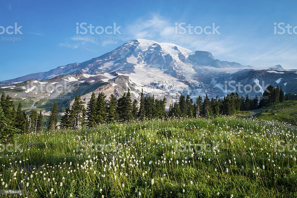 Beautiful wildflowers and Mount Rainier stock photo