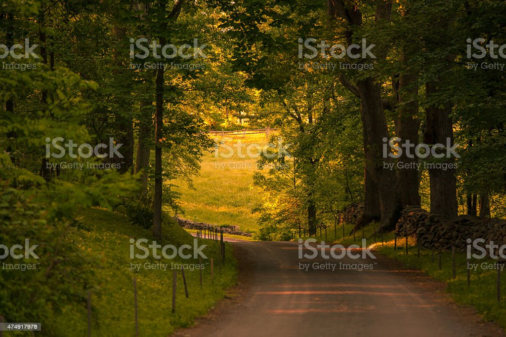 Beautiful winding country road shaded by old trees stock photo