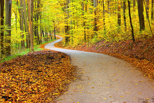 istock Beautiful winding road through forest 506351700