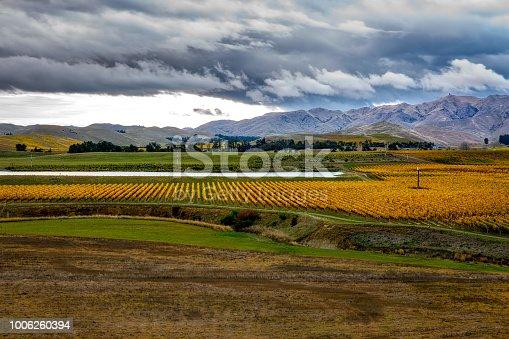 619246768 istock photo Beautiful wine growing country in NZ 1006260394