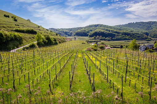 A beautiful wineyard nearby Badberg in Kaiserstuhl, Germany. Taken on a nice warm spring afternoon.