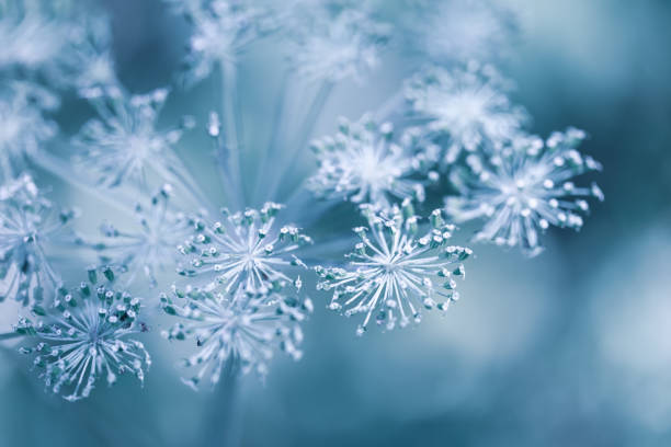 красивый зимний фон с сухими растениями покрыты мерзлостом в зимнее утро. - иней замёрзшая вода стоковые фото и изображения