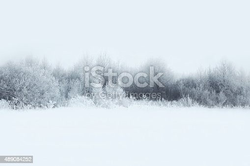 istock Beautiful winter forest landscape, trees covered with snow 489084252