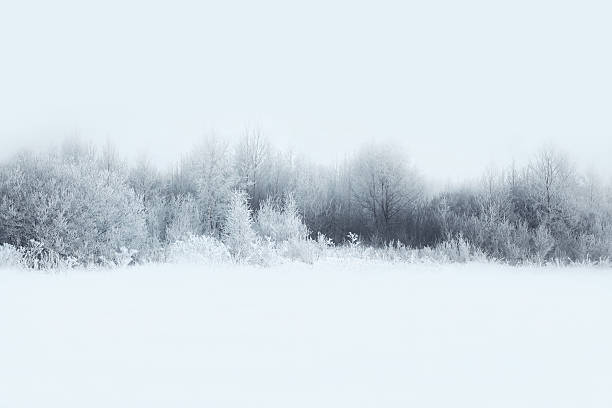beautiful winter forest landscape, trees covered with snow - trees in mist stock pictures, royalty-free photos & images