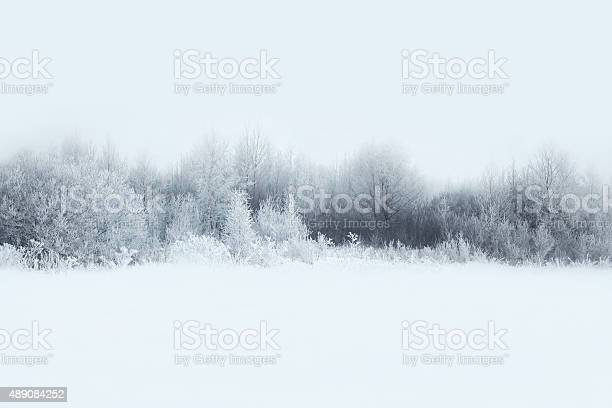 Photo of Beautiful winter forest landscape, trees covered with snow