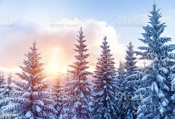 Photo of Beautiful winter forest