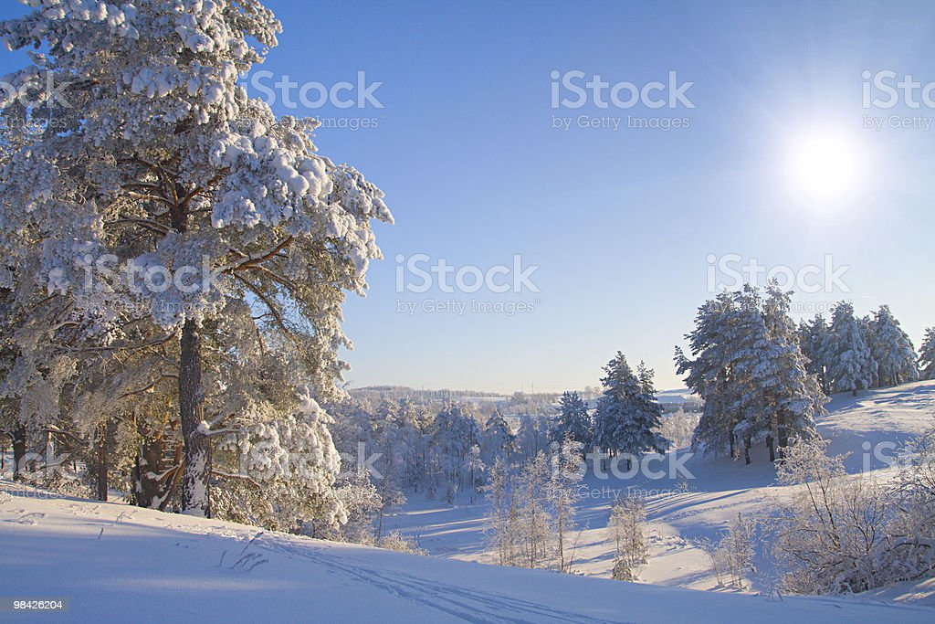 beautiful winter forest royalty-free stock photo