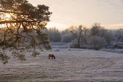 beautiful winter frozen rural landscape at sunset