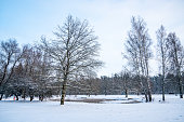 Beautiful winter in Sigulda, Latvia. Nature view, trees covered in snow, small streams. Winter wonderland.
