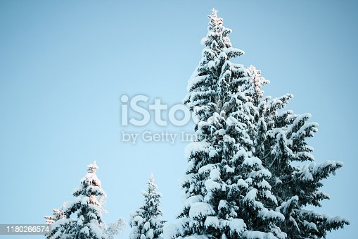 1061644120 istock photo Beautiful winter landscape: forest trees, pines and firs covered with snow on a sunny Christmas day, against the sky. 1180266574