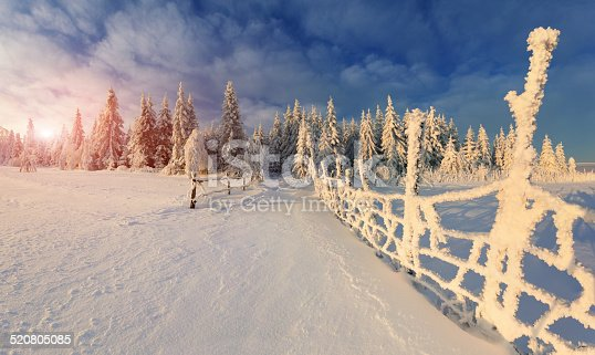 istock Beautiful winter landscape in the mountain forest. 520805085