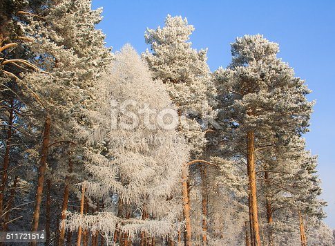 istock Beautiful winter landscape 511721514