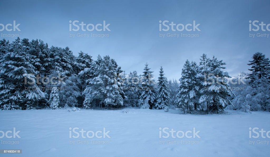 beautiful winter landscape snow tree stock photo