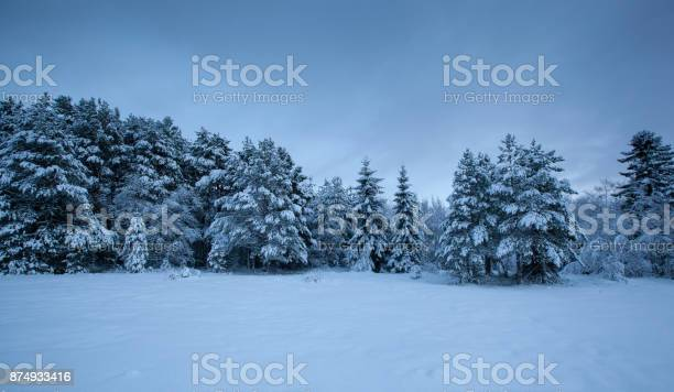 Photo of beautiful winter landscape snow tree