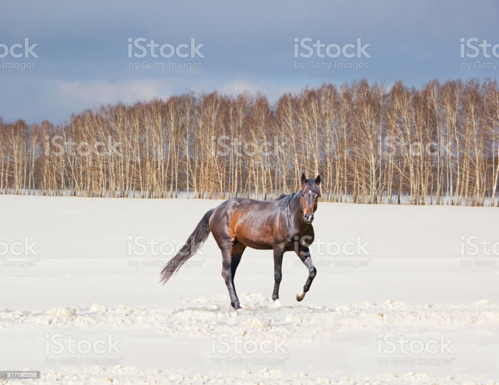 Beautiful winter landscape with a brown horse on a snow-covered field stock photo