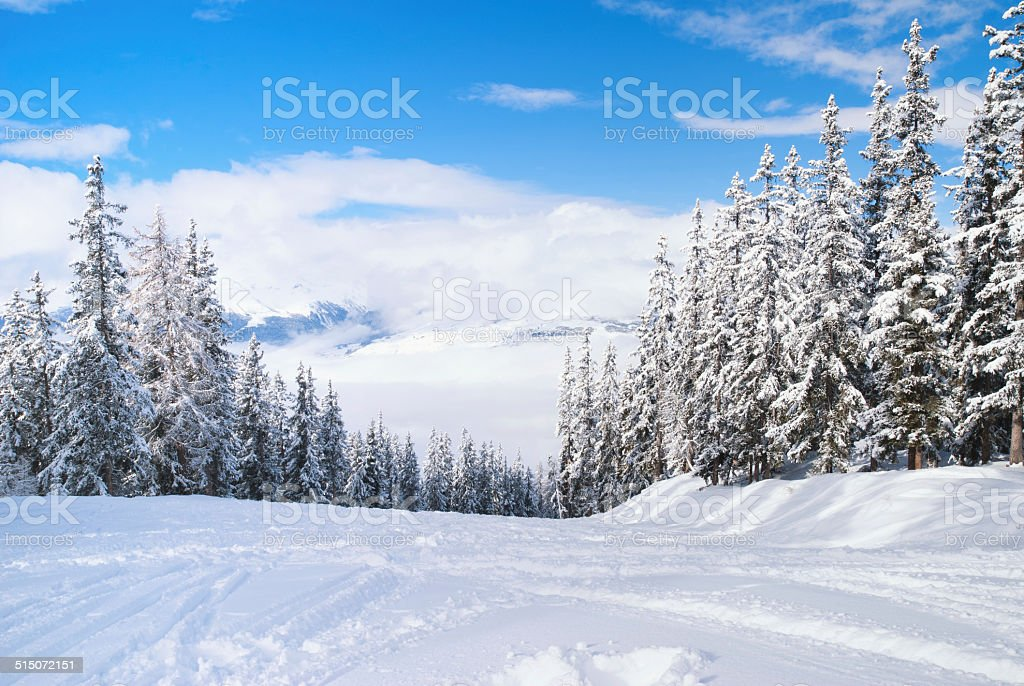 Beautiful winter landscape with fir trees stock photo