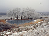 Beautiful winter landscape with lake, frozen trees, flying bird and grass in the frost. North nature