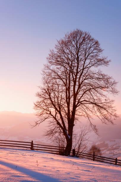 Herrliche Winterlandschaft mit einzelnen Baum in weiche Sonnenuntergang Licht, vertikale Bild – Foto