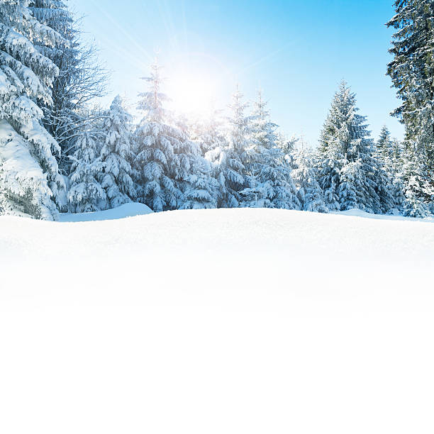 Beautiful winter landscape with snow – Copy space stock photo