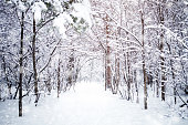 Beautiful winter landscape with snow covered trees. Happy New Year. Merry Christmas.