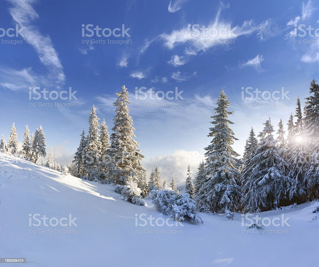 Beautiful winter landscape with snow covered trees royalty-free stock photo