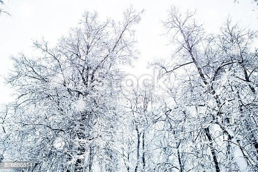 istock Beautiful winter landscape with snow covered trees 876886514
