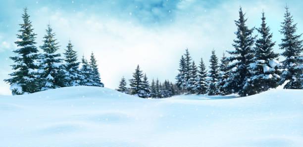 雪の美しい冬の風景には、木が覆われています。クリスマス背景 - 雪景色 ストックフォトと画像