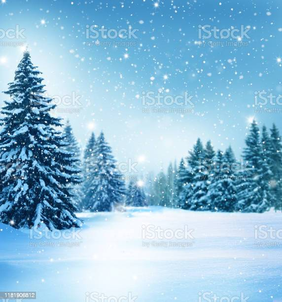 Photo of Beautiful winter landscape with snow covered trees.Christmas background