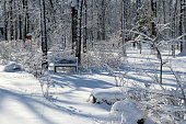 Scenic snowy landscape with forest covered by fresh snow during sunrise. Wisconsin nature background, Midwest USA.